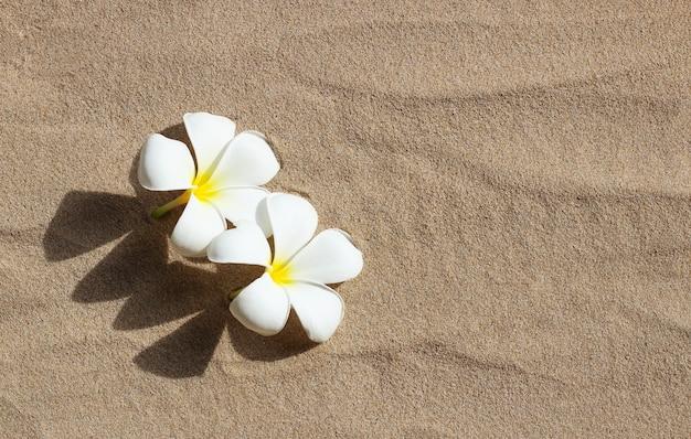 Fleurs de plumeria blanches sur fond de sable