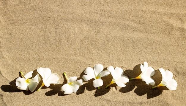 Fleurs de plumeria blanches sur le sable.