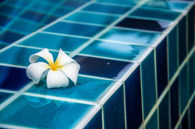 Des fleurs de plumeria bordent la piscine