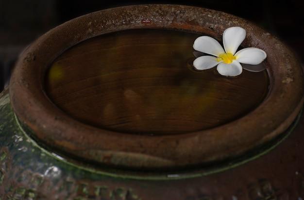 Les fleurs de plumeria sont sur le couvercle en bois d'un vieux pot vintage.