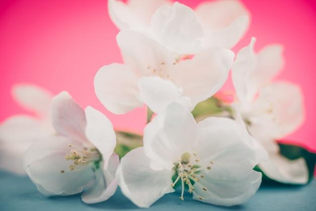 Fleurs de pommier sur la couleur floue