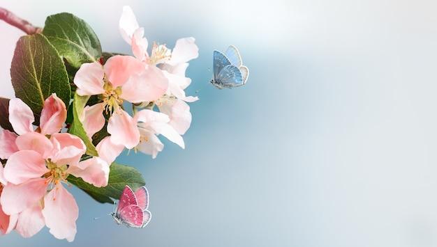 Fleurs de pommier rose de printemps avec papillon volant sur fond bleu. fermer. espace de copie