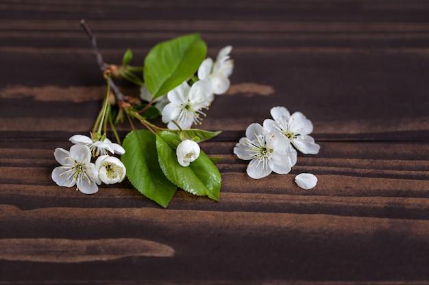 Fleurs de pommier sur une table en bois
