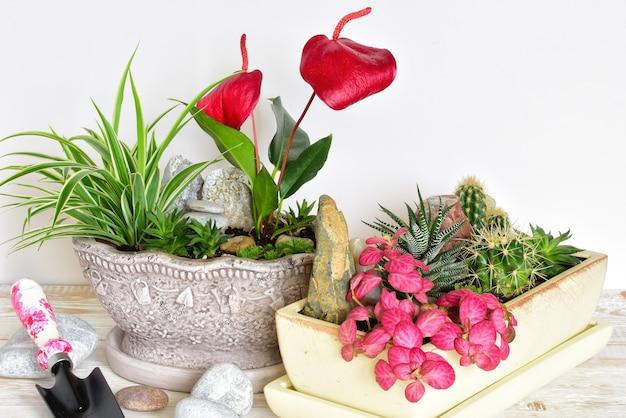Fleurs en pot. fleurs de chambre en pot