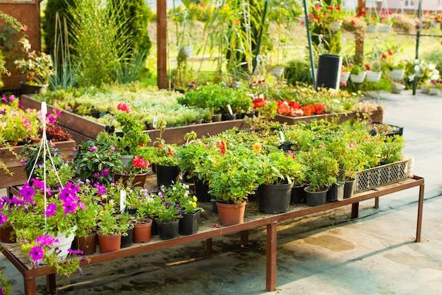Fleurs en pots à la serre, marché maraîcher