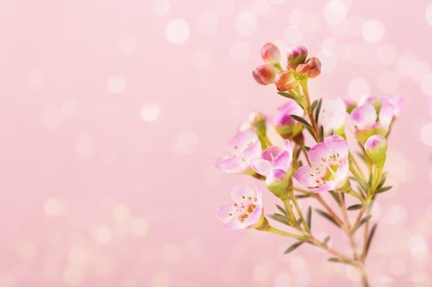 Fleurs pourpres sur fond de bokeh