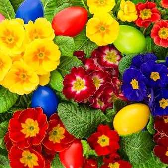 Fleurs de primevère avec décoration d'oeufs de pâques colorés