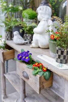 Fleurs primevère ou primevère dans le tiroir en bois, magasin de fleurs à paris, france