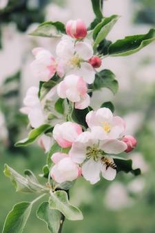 Fleurs de printemps bannière printemps renouvellement nature au printemps fleurs floraison nouvelle vie fleur rose sakura