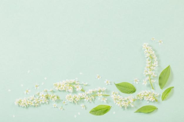 Fleurs de printemps blanc sur fond de papier