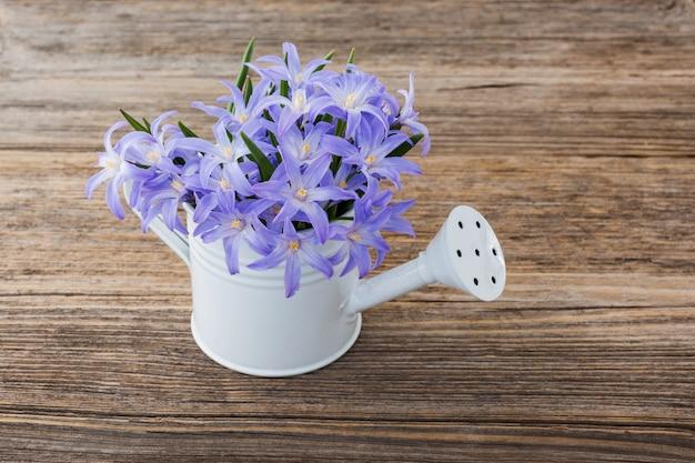 Fleurs de printemps bleu dans un petit arrosoir sur fond en bois