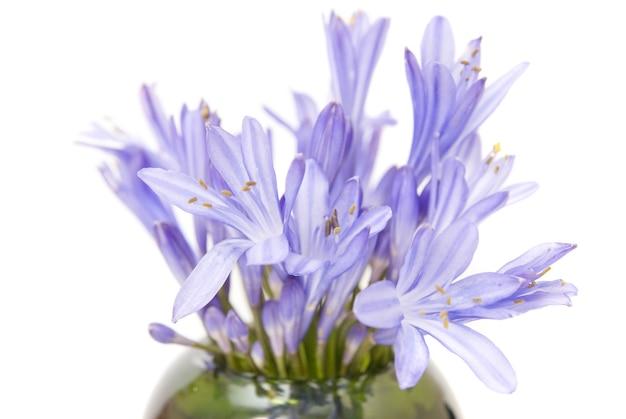 Fleurs de printemps bleues