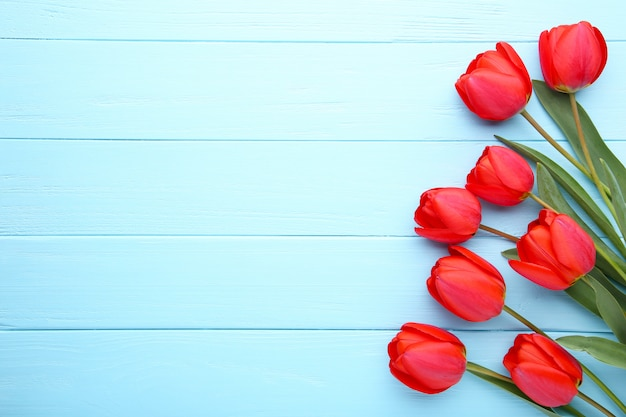 Fleurs de printemps. bouquet de tulipes rouges sur bleu.