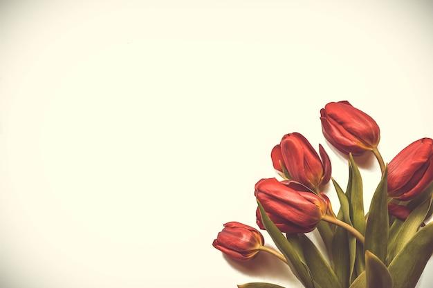 Fleurs de printemps. bouquet de tulipes rouges sur fond blanc. fond de fête des mères et de la saint-valentin. vue de dessus du bouton floral rouge. disposition de conception de carte de voeux de printemps et de pâques.