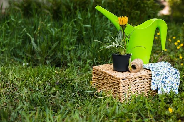 Fleurs de printemps dans un panier en osier avec des outils de jardin