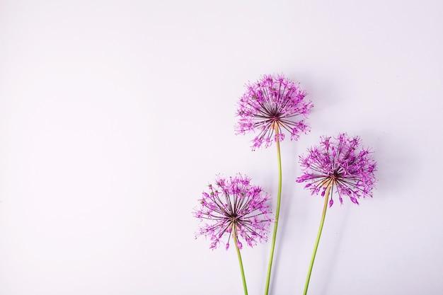 Fleurs de printemps sur fond gris