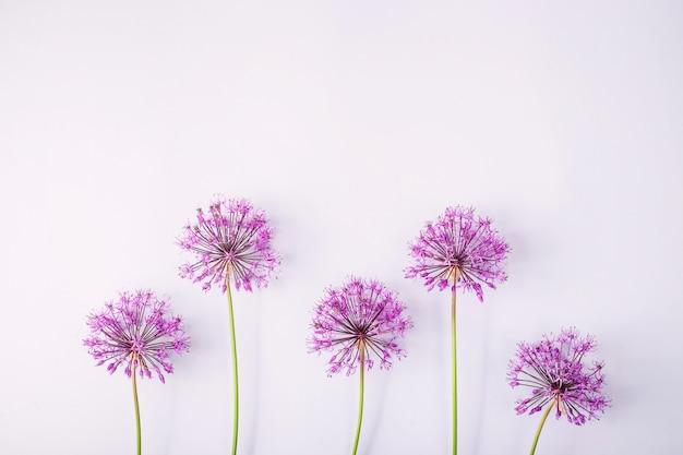 Fleurs de printemps sur un gris