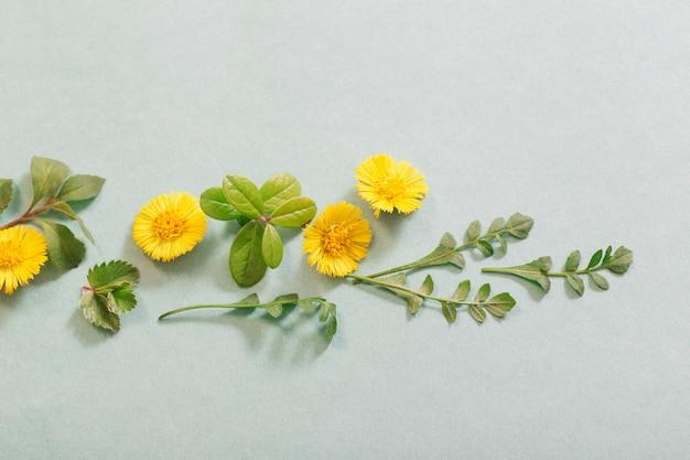 Fleurs de printemps jaune sur fond de papier