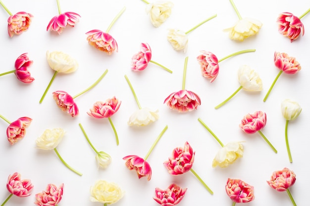 Fleurs de printemps tulipes sur des couleurs pastel