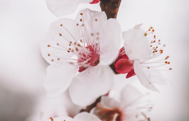 Fleurs de printemps vue rapprochée des couleurs de printemps