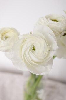 Fleurs de renoncule élégantes blanches sur fond blanc