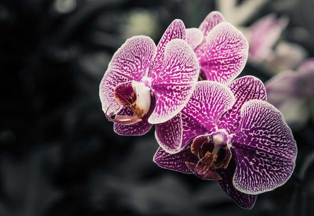 Fleurs rétro, fleurs vintage