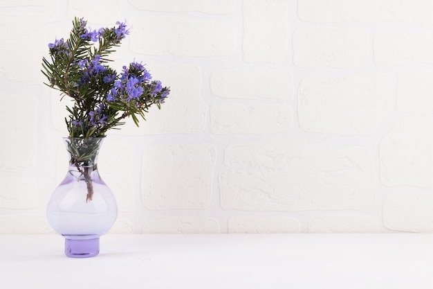 Fleurs de romarin sur fond blanc