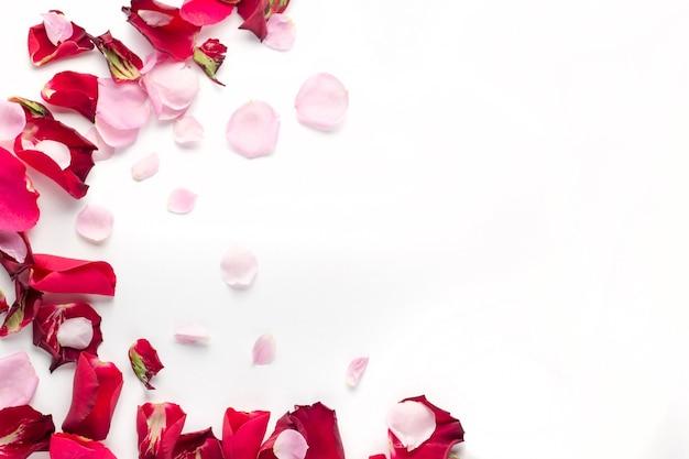 Fleurs de rose pétales rouges et roses sur blanc