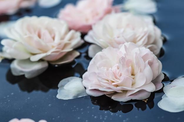 Fleurs de rose rose pâle et pétales blancs sur l'eau bleue pour le festival de l'eau ou le spa