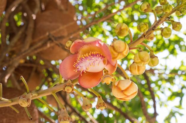 Fleurs roses sur l'arbre