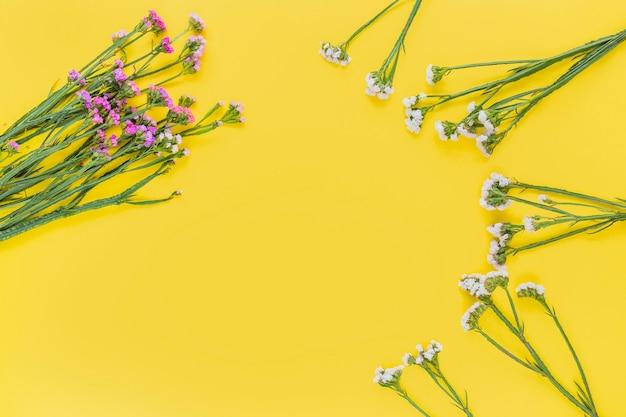Fleurs roses et blanches sur fond jaune