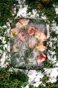 Fleurs roses congelées sur de la mousse de neige