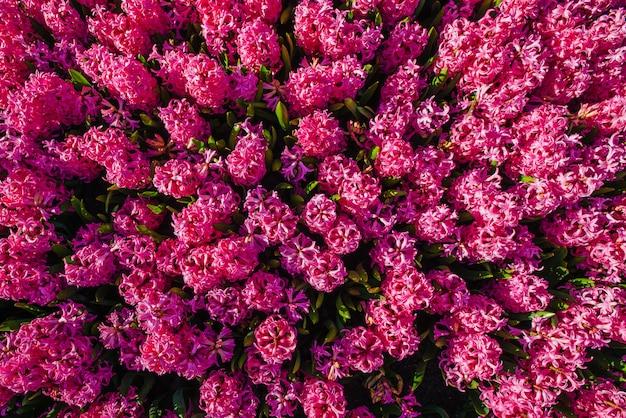Fleurs roses dans les jardins