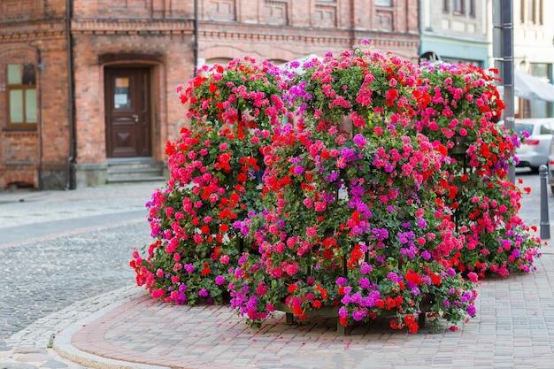 Fleurs roses dans la rue