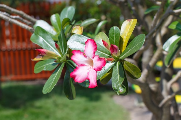 Fleurs roses détail nature