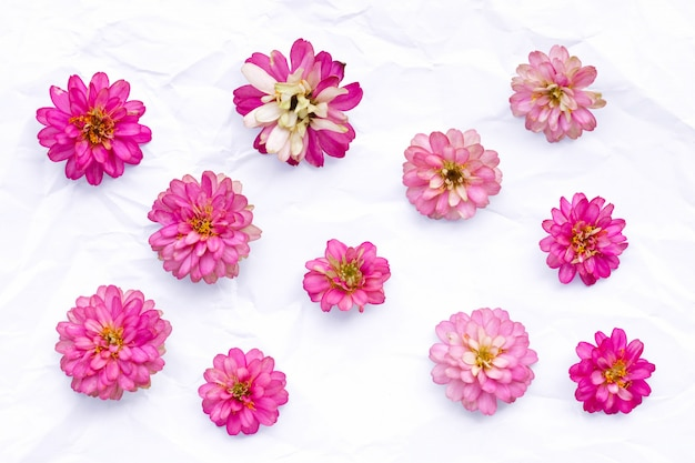 Fleurs roses sur fond blanc. vue aérienne. mise à plat. angélonie, marguerite rampante, zinnia rose.