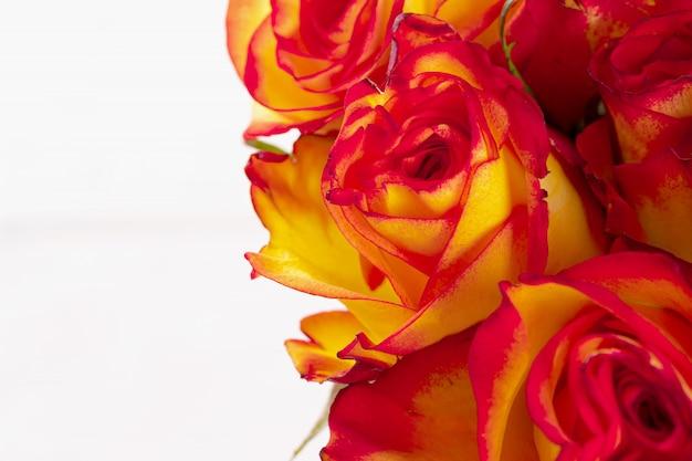Fleurs de roses fraîches. fond de fleurs se bouchent