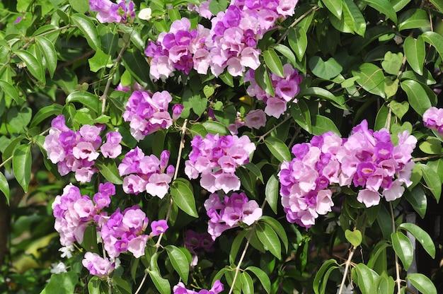 Fleurs roses insectes et abeilles sucent