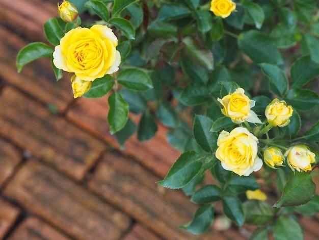 Fleurs roses jaunes sur fond de plancher de brique.