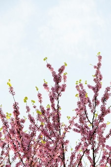 Fleurs roses qui fleurissent au printemps