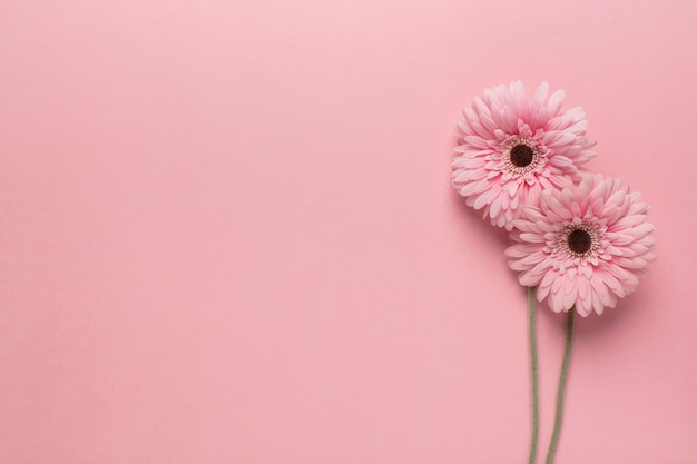 Fleurs roses sur rose