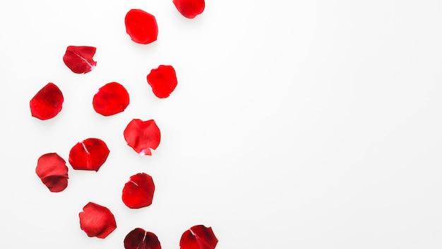 Fleurs roses rouges
