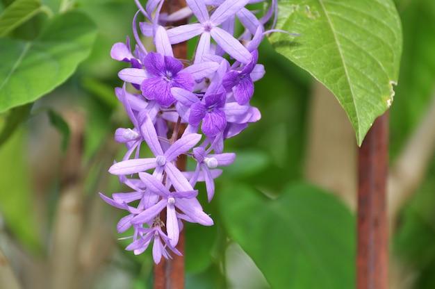 Fleurs roses et violettes les insectes et les abeilles sucent
