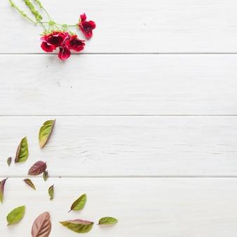 Fleurs rouges et feuilles