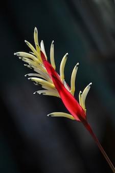 Des fleurs rouges et jaunes apparaissent sur un fond sombre