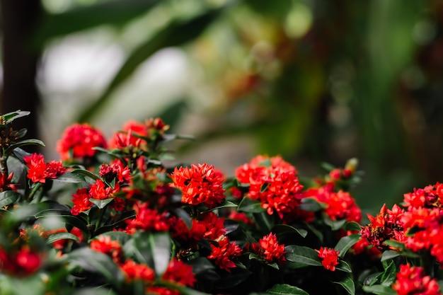 Fleurs rouges tropicales