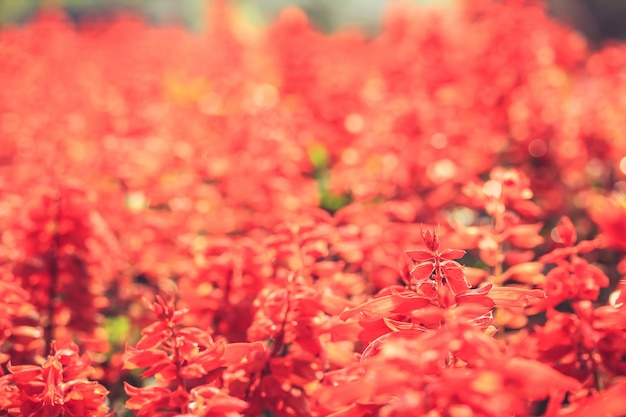 Les fleurs rouges