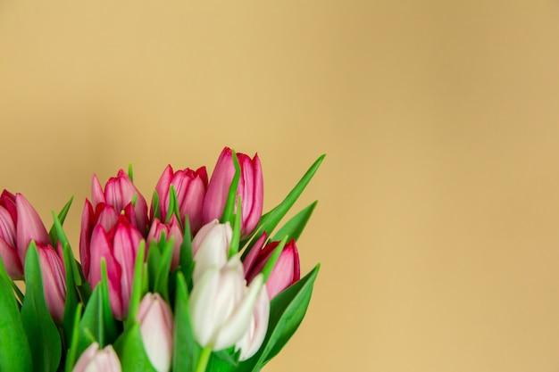 Fleurs de saison de printemps, gros plan de tulipes