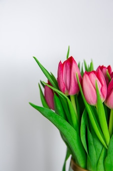 Fleurs de saison de printemps, tulipes roses sur fond blanc uni, gros plan