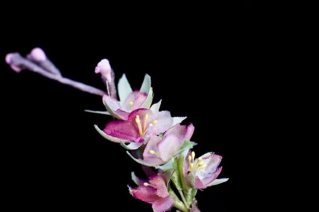 Fleurs de sakura printanière rose délicat isolés sur un fond noir. fleurs en soie artificielle